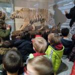 Resumen actividades sobre los dinosaurios/ Prehistoria, Infantil 5 años